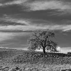 """photo """"Дуб на Горе. Зима"""""""