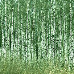 "фото ""Зеленый шум"""