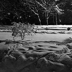 """photo """"Winter symphony"""""""