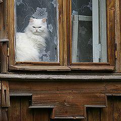 "фото ""Кошка в окошке"""