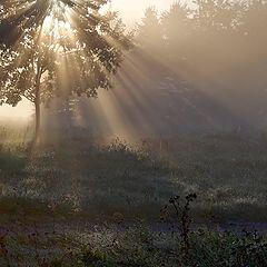 """photo """"утро,свет,Минск"""""""