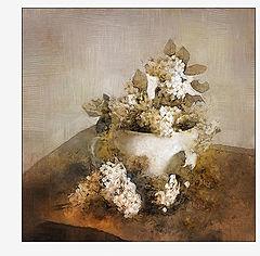 """фото """"белые соцветия"""""""