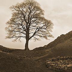 """фото """"Hadrian's wall 4"""""""