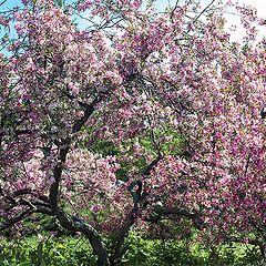 "фото ""Скоро будет настоящая весна"""