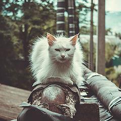 """photo """"white cat"""""""