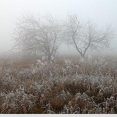 "фото ""Dance in the fog"""