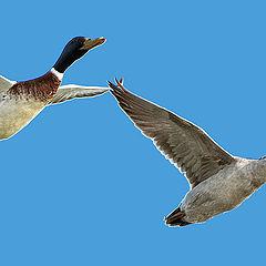 "photo ""Volar de la mano"""