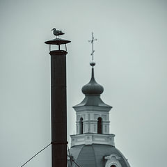 "photo ""bird on the pipe"""