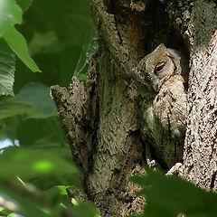 """фото """"Лесной дух -  идеальный камуфляж"""""""