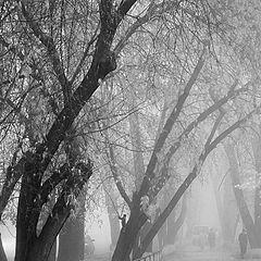 """фото """"Городской рисунок"""""""