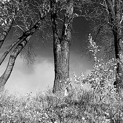 "фото ""Осень. Эпилог."""