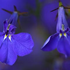 """photo """"Un mundo azul"""""""