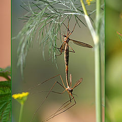 """photo """"Insect love"""""""
