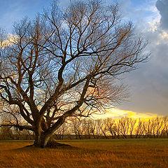 """фото """"Большое дерево"""""""