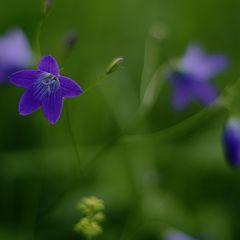 """photo """"Цветок лесной"""""""