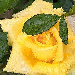 """фото """"Drops of rain_1"""""""