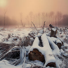 "photo ""Serenity"""