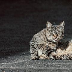 """photo """"cat sketch"""""""