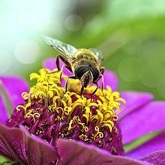 """фото """"Пчеловидка"""""""