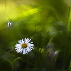 """фото """"Лето- это маленькая жизнь"""""""