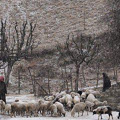 "photo ""Shepherds"""