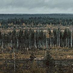 "photo ""autumn wasteland"""
