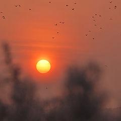 "фото ""Рассвет с птицами."""