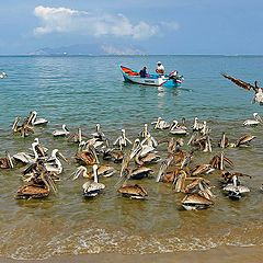 """photo """"Pelican summer"""""""