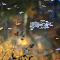 """фото """"Осенний круговорот"""""""