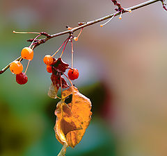 "photo ""Autumn leaf"""