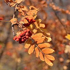 """фото """"Осень золотая..."""""""