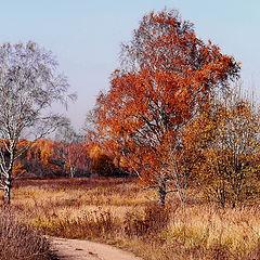 """фото """"осень... осень.. как ты прекрасна..."""""""