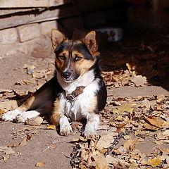 """фото """"Осенний пес"""""""