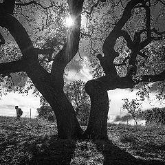 "photo ""Дерево в Контровом Свете"""