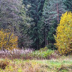 "фото ""У лесных ворот"""