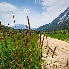 """фото """"Пшеница в горах"""""""
