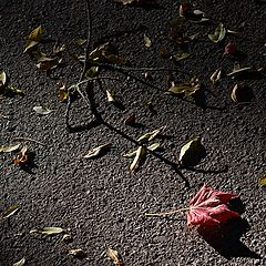 """фото """"осенняя #6: """"роза"""""""""""