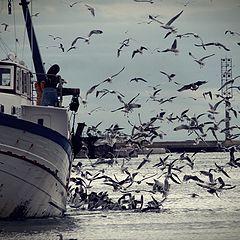 """фото """"boats and seagulls"""""""