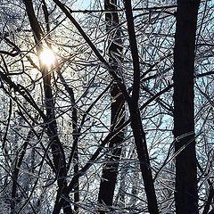 """фото """"Магия зимы"""""""