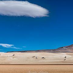 """photo """"Altiplano Dream"""""""