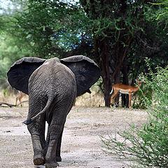 """photo """"Африка. Сафари на слонов."""""""