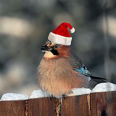 "photo ""Happy holidays, friends!"""