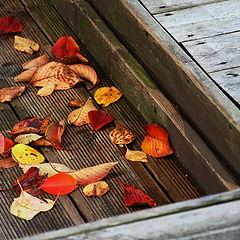 """фото """"Осень на подносе"""""""