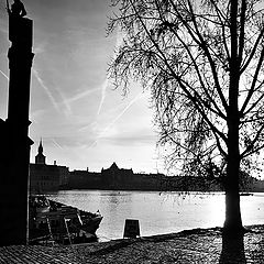 "photo ""Статуя и дерево"""