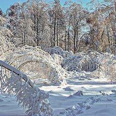 """фото """"Мороз и солнце...."""""""