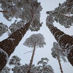 "фото ""Фрагмент зимнего леса"""