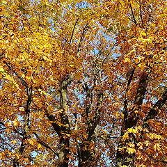 "photo ""those who keep Autumn"""