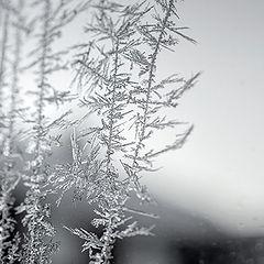 "фото ""Мороз рисует..."""