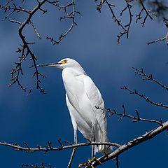 """фото """"Egret"""""""