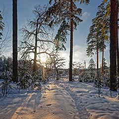 "фото ""Тропинка в лесу"""